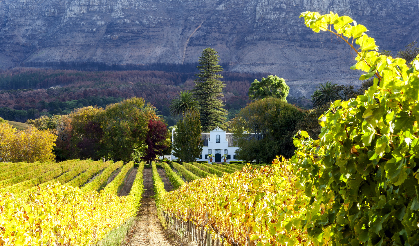 Stroll through the rich vineyards of Constantia