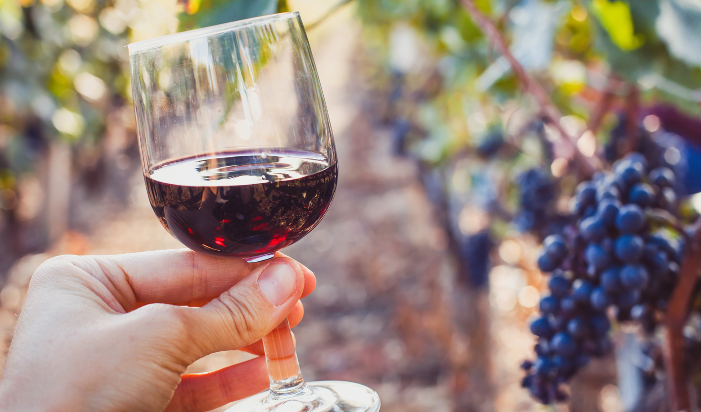 Sample rich red wines at local wineries