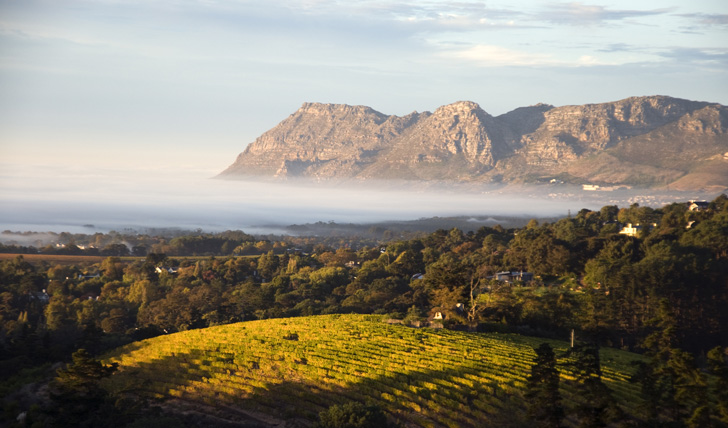 Explore Cape Towns vineyards on a luxury holiday