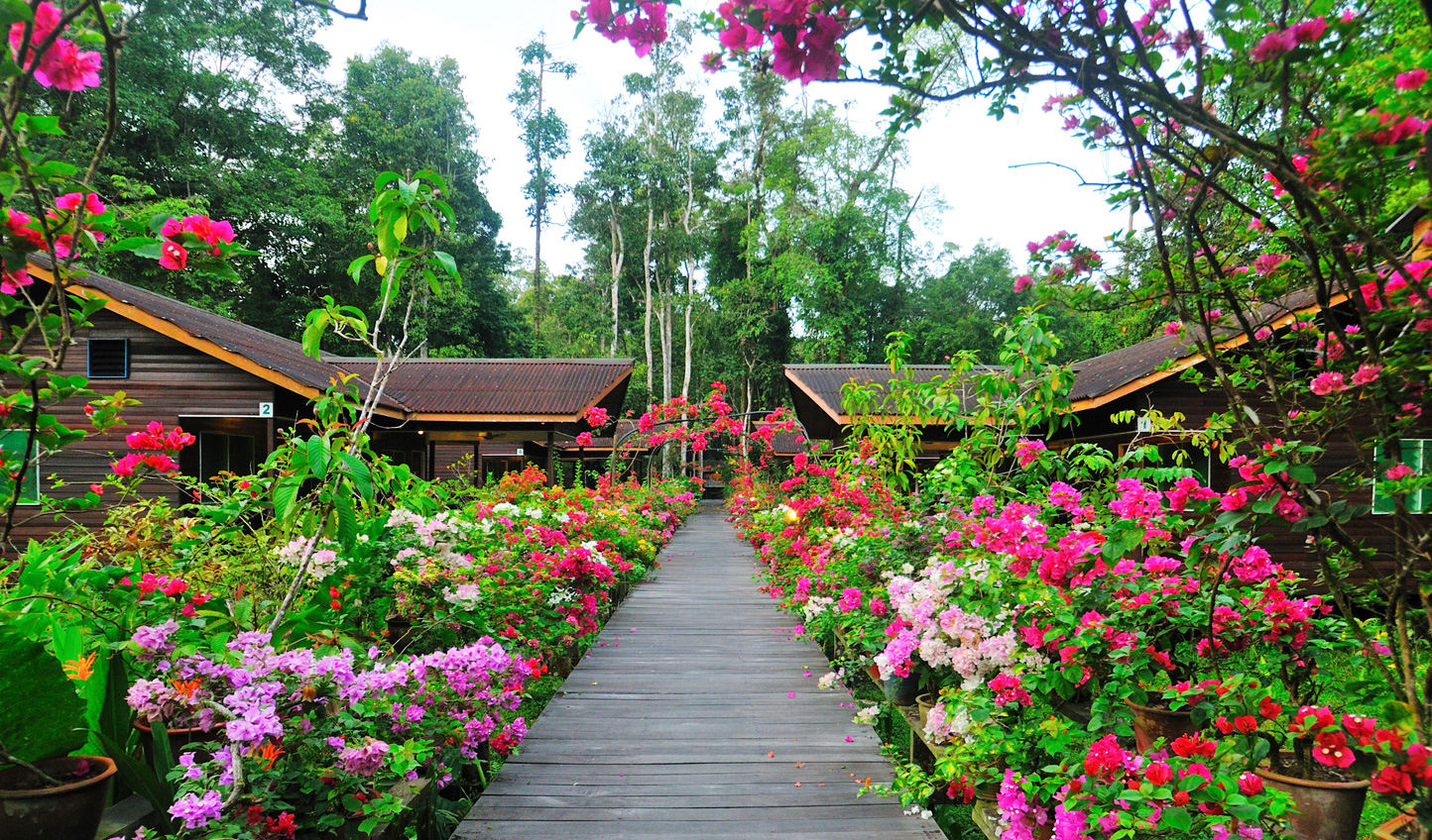 Escape to the serenity of Borneo