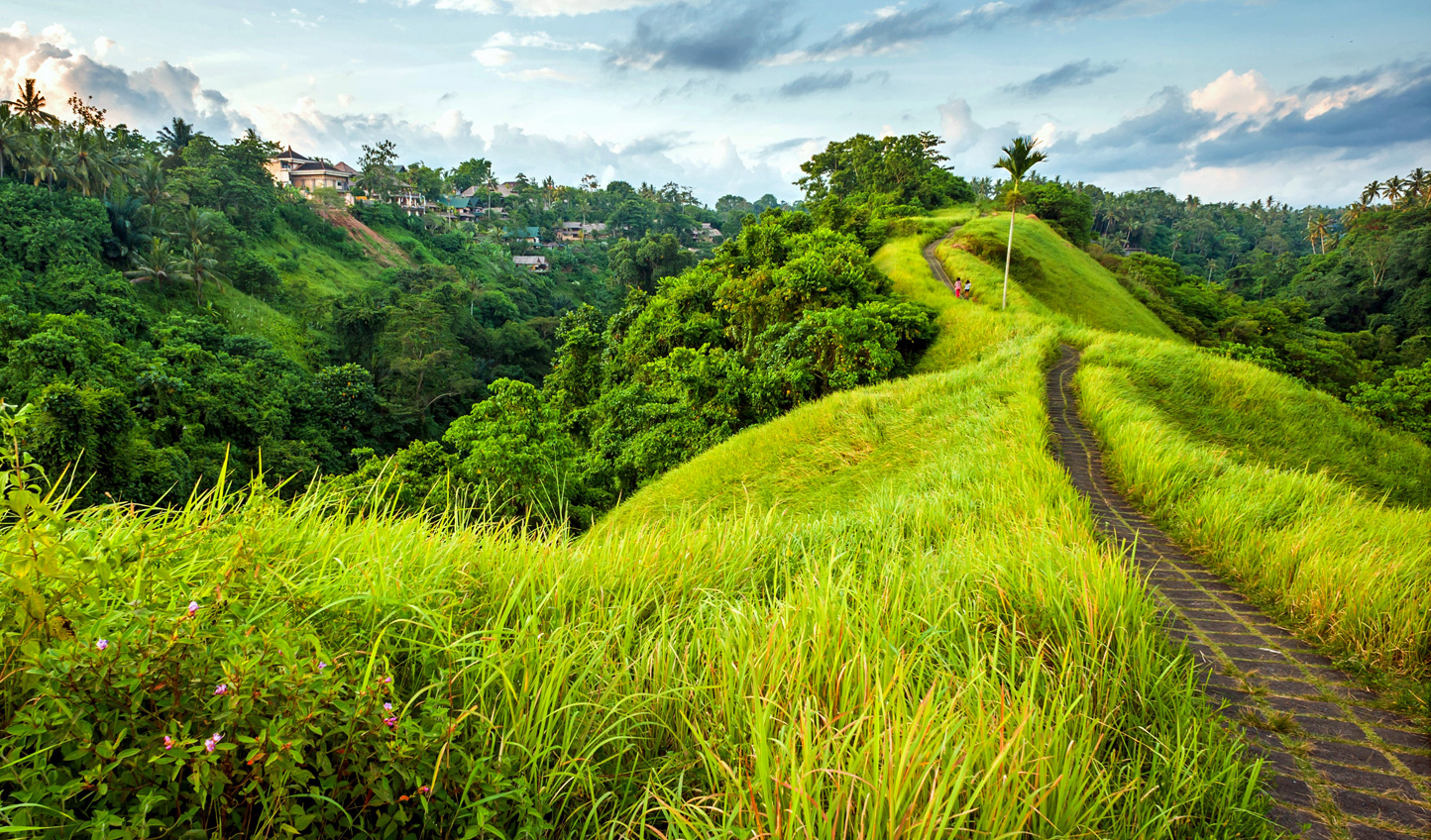 Head into the lush paddy fields of Ubud
