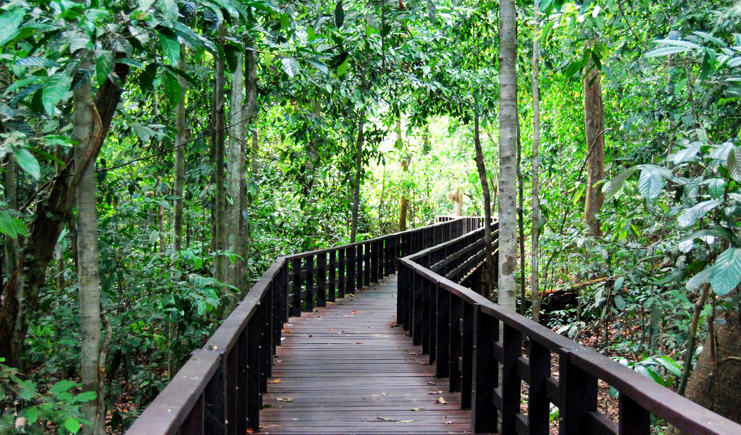 Wind your way through the jungle to your home at Abai Jungle Lodge
