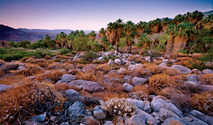 Palm Springs | Black Tomato