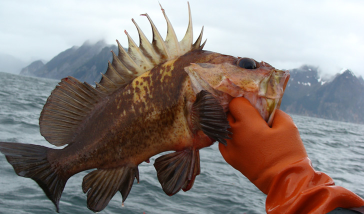 Black tomato 39 s guide to luxury alaska holidays for Fish rock rentals