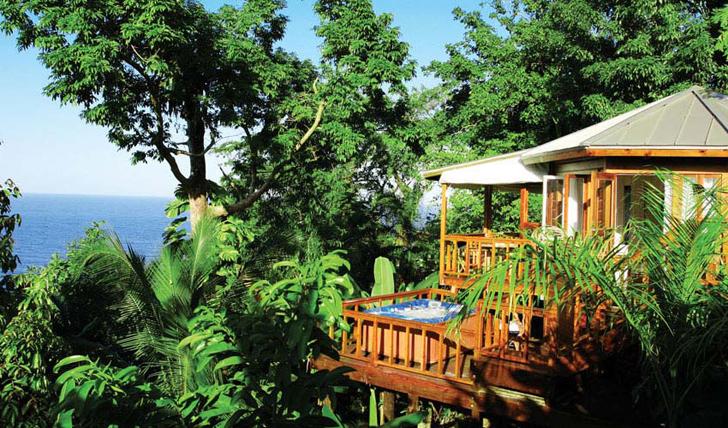 A Cabin in the Jungle