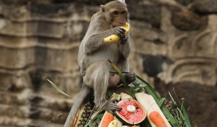 Monkey Festival | Black Tomato