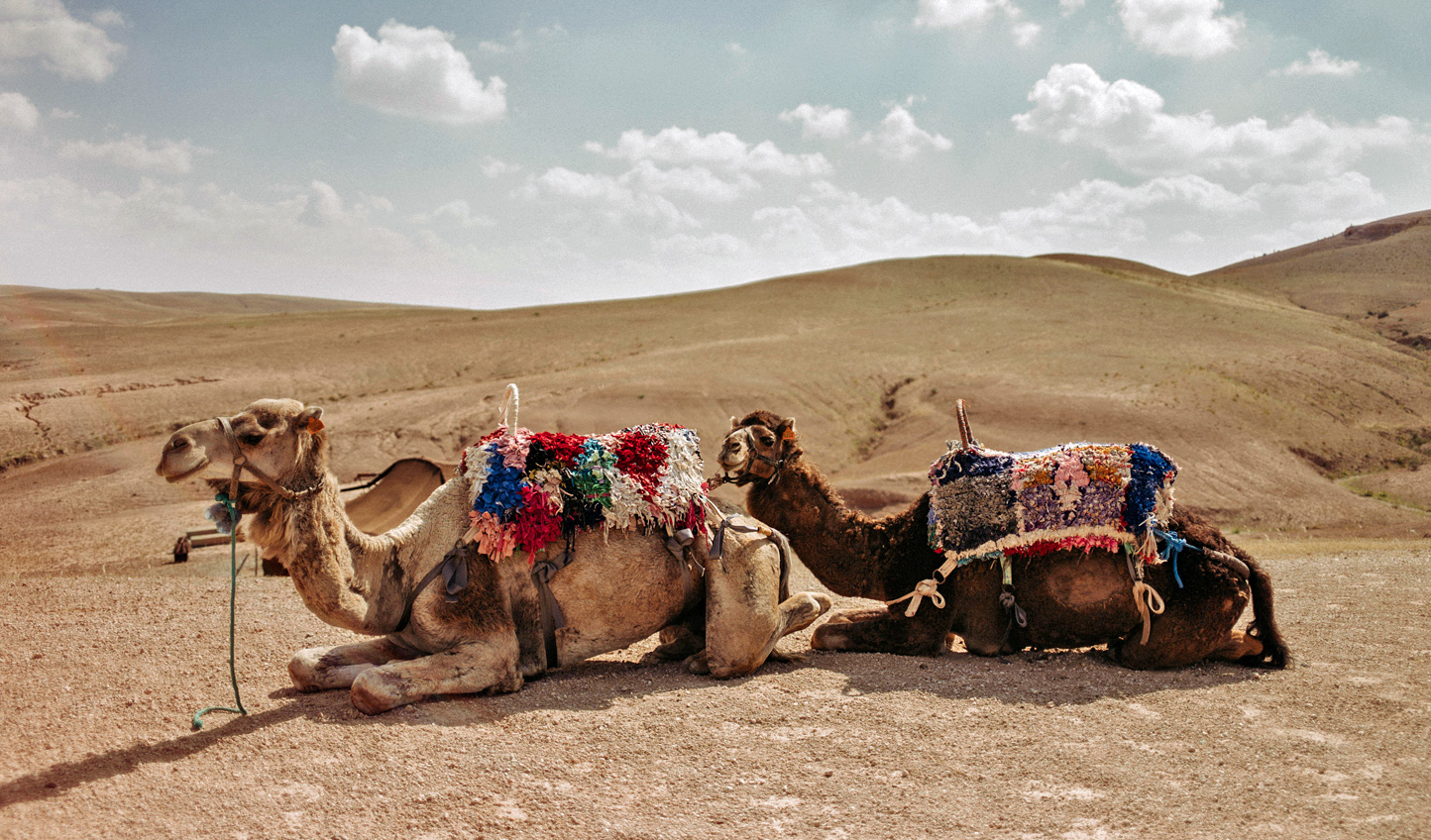 Saddle up and see the Agafay Desert at sunset on a camel ride