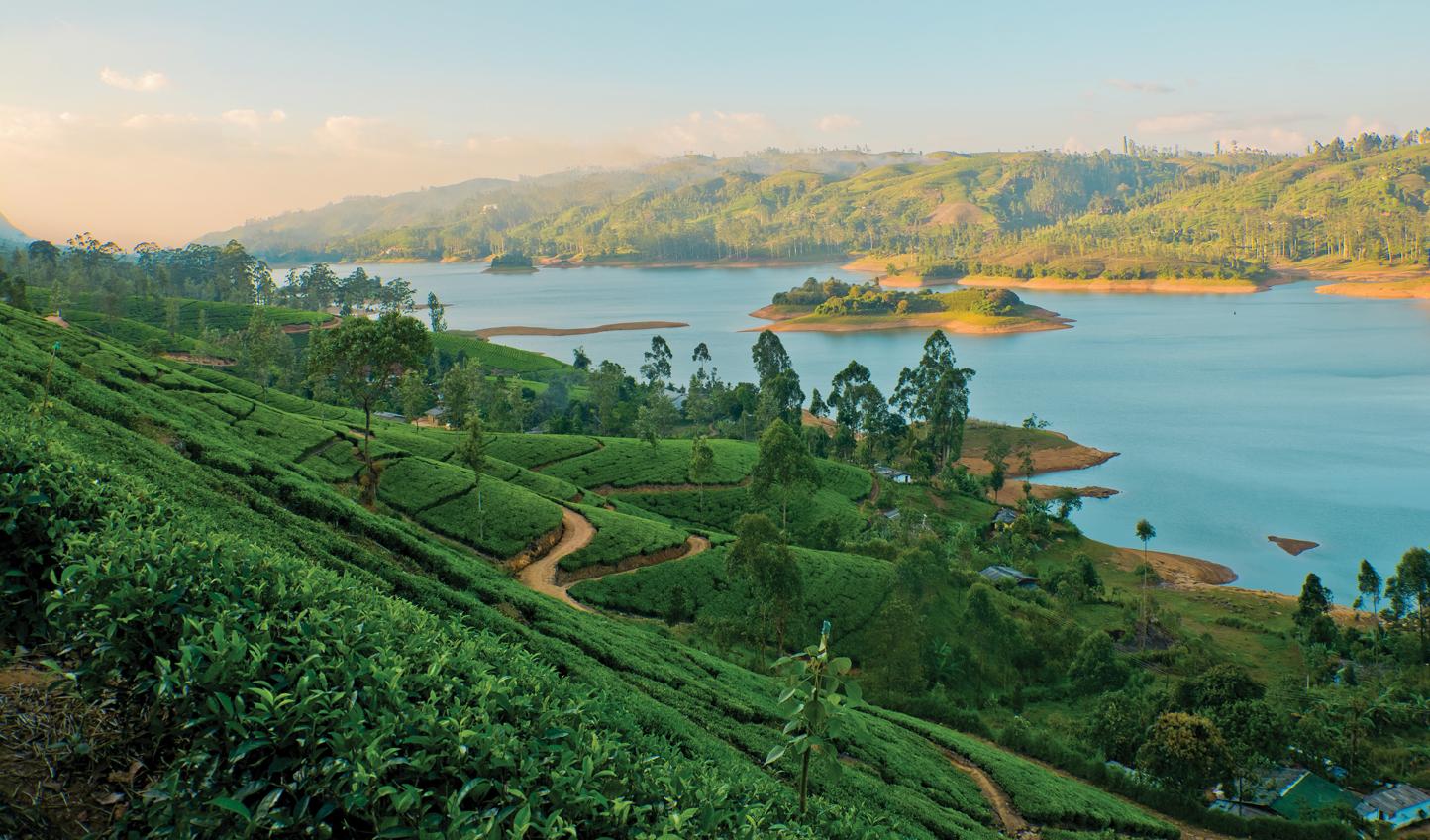 Tea-Country-Reservoir