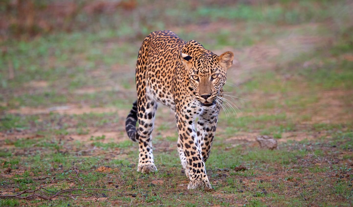 Yala-National-Park_51536548