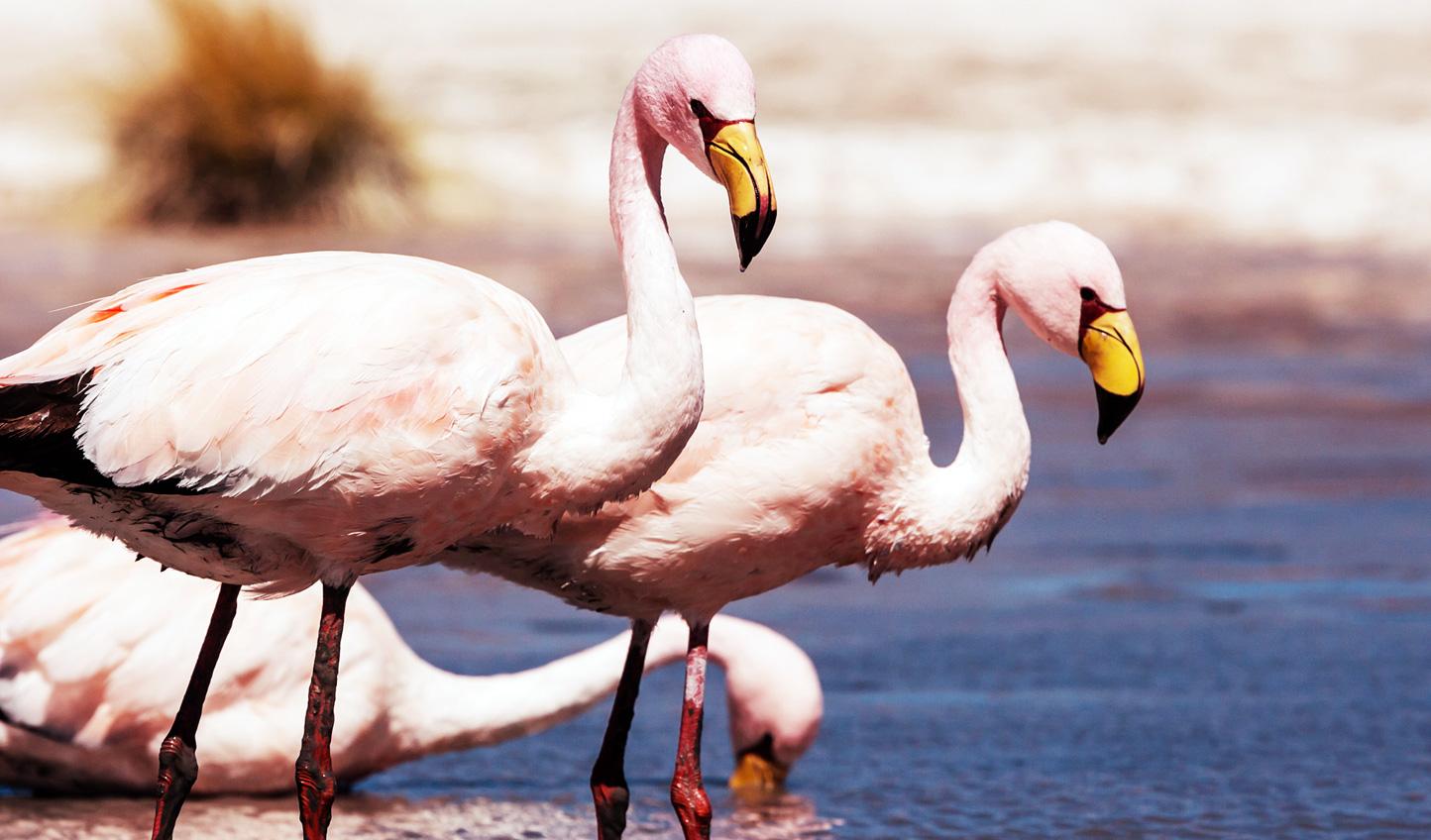 Marvel at the bright pink flamingos of Chaxa Pond