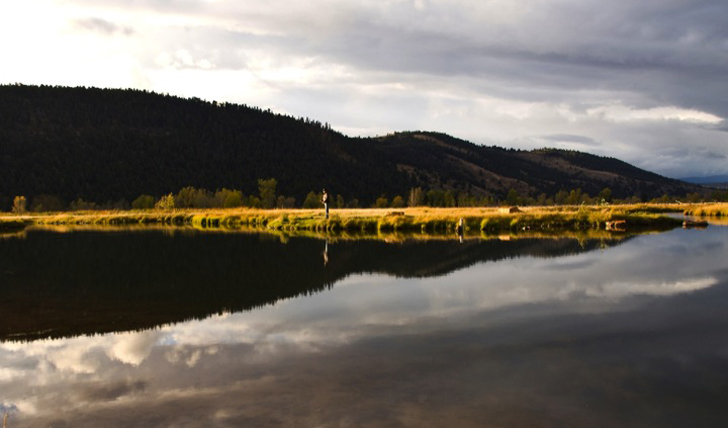 Fish at the lake