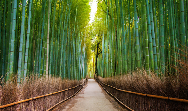 Bamboo-Forest-in-Japan,-Arashiyama,-Kyoto_173985326