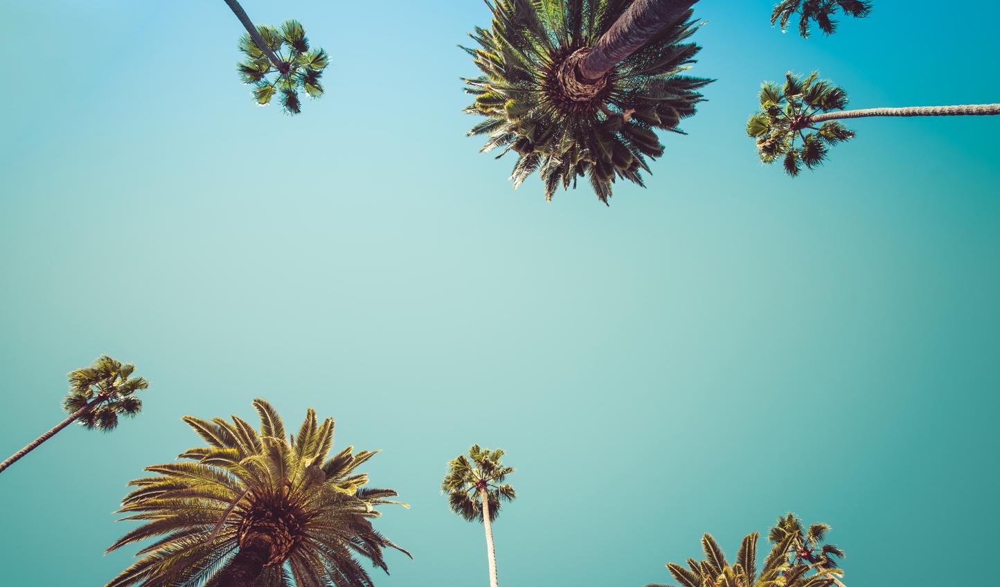 Cruise beneath those iconic palm trees