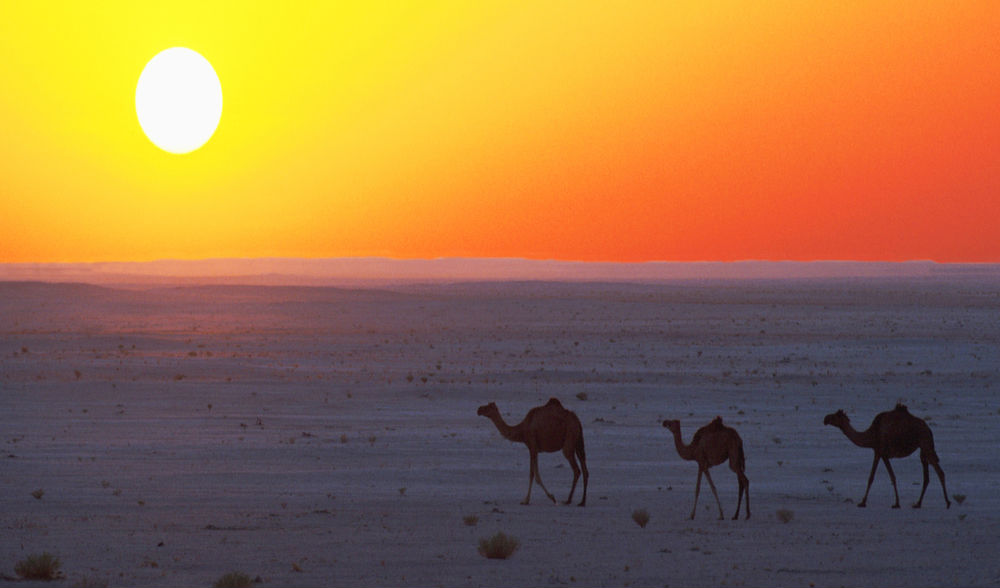 Take a sunset camel ride out into the desert
