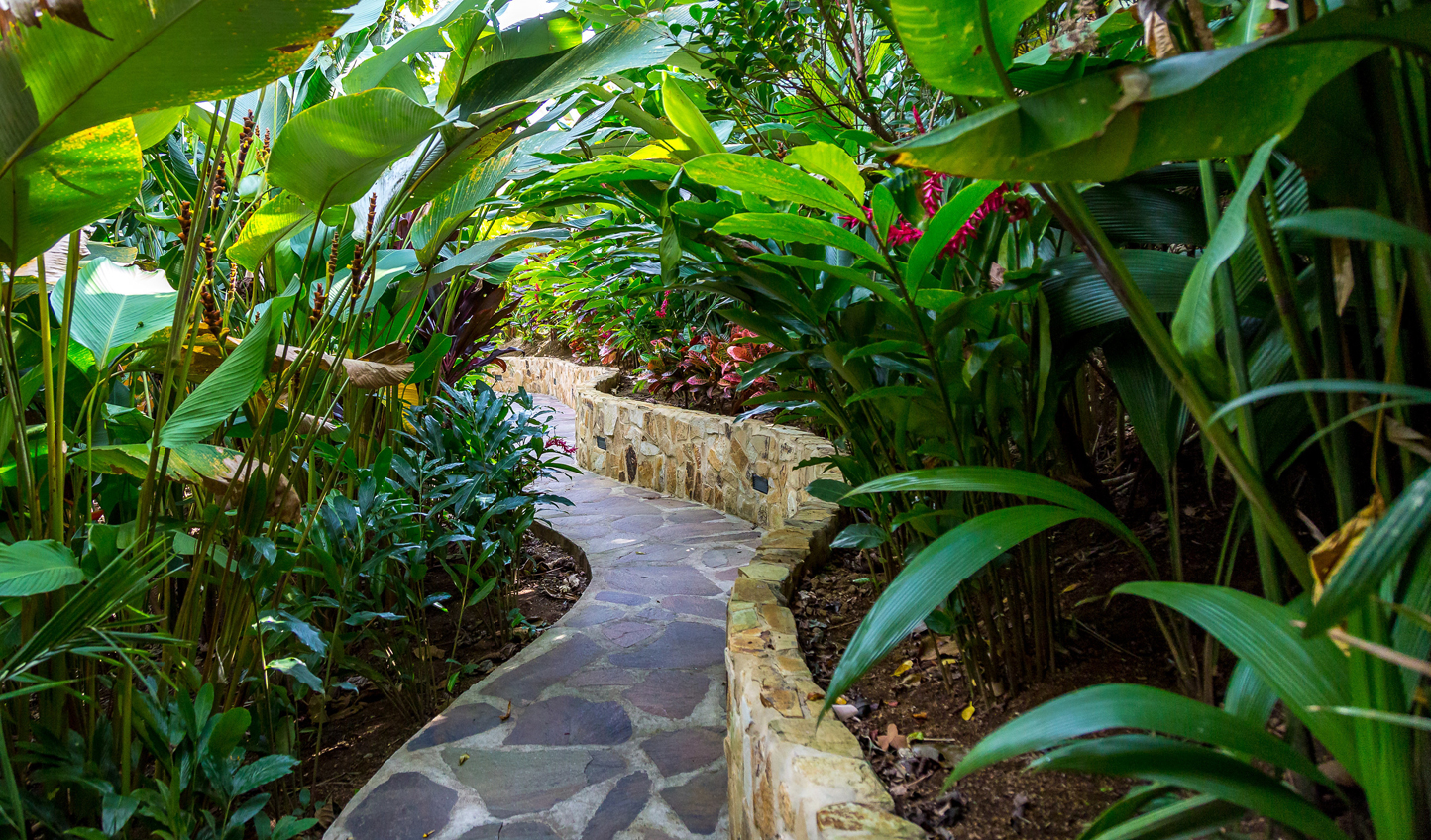 Stroll through the jungle gardens