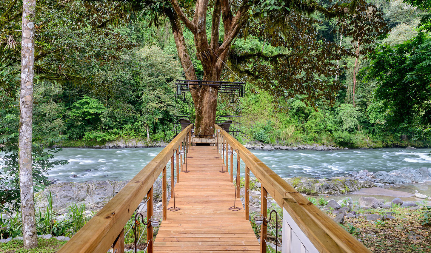 Walk through the trees and over the river to reach your suite