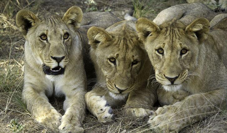 Safari holiday in Namibia
