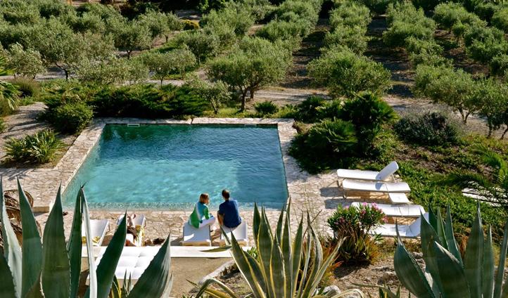 Swim amongst the olive groves