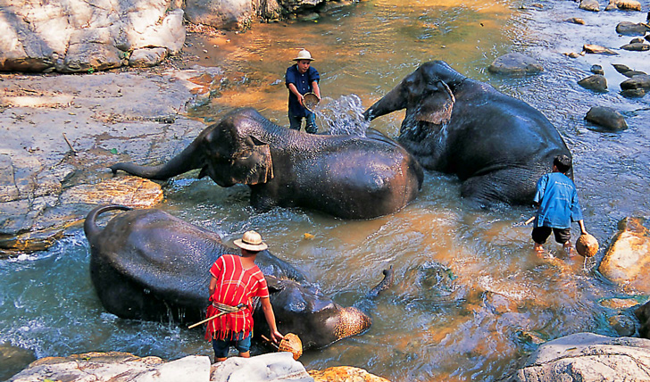 Bathe with elephants in Chiang Mai