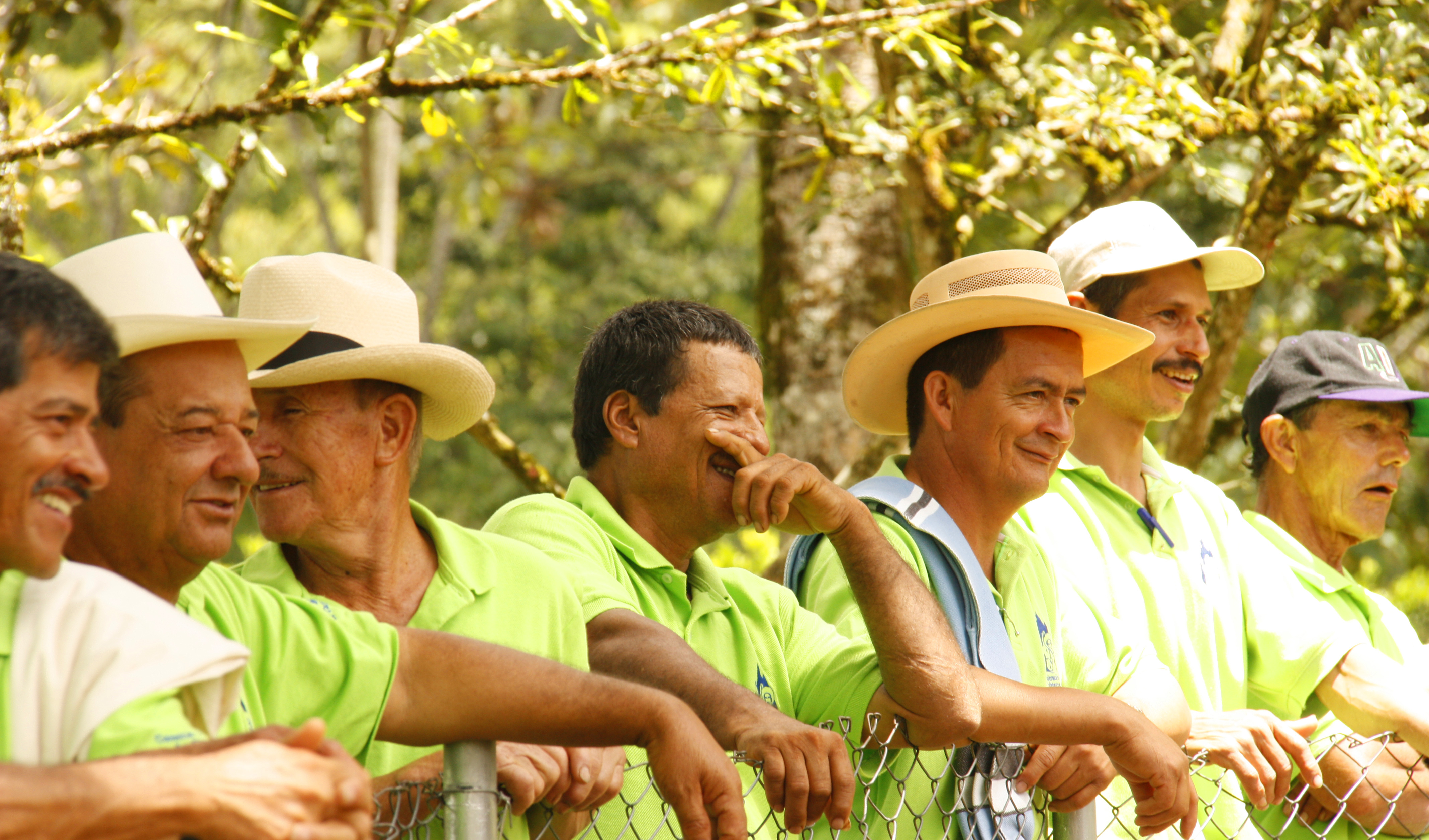 Colombian coffee pickers