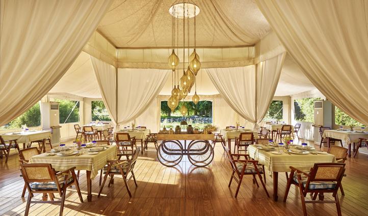 Elegant camp dining