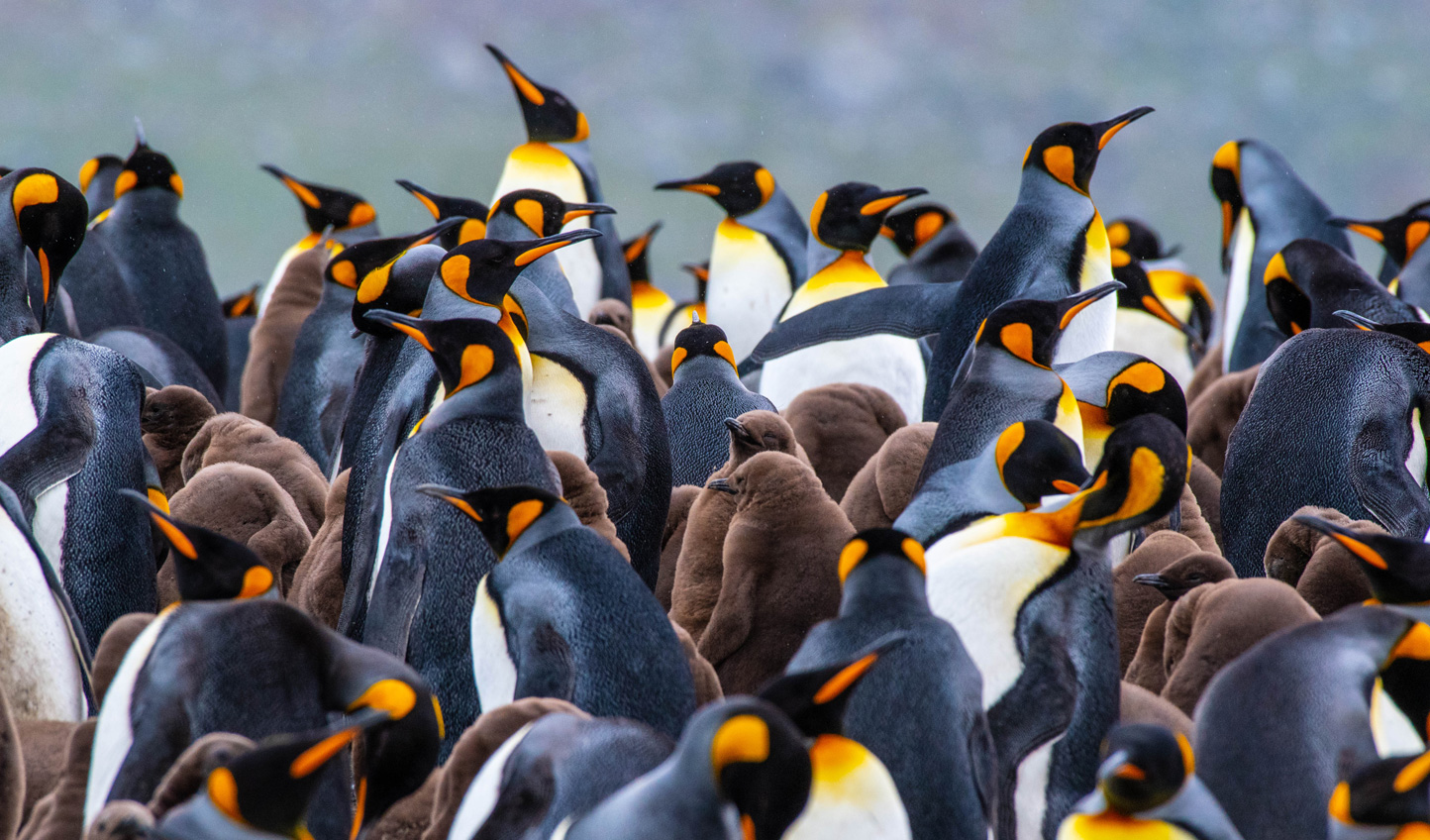 Spot colonies of Emperor Penguins on your travels