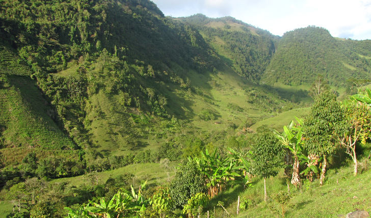 The Andean coffee plantations