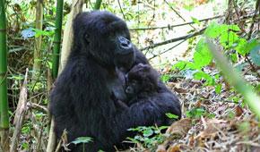 Rwanda jungle trek