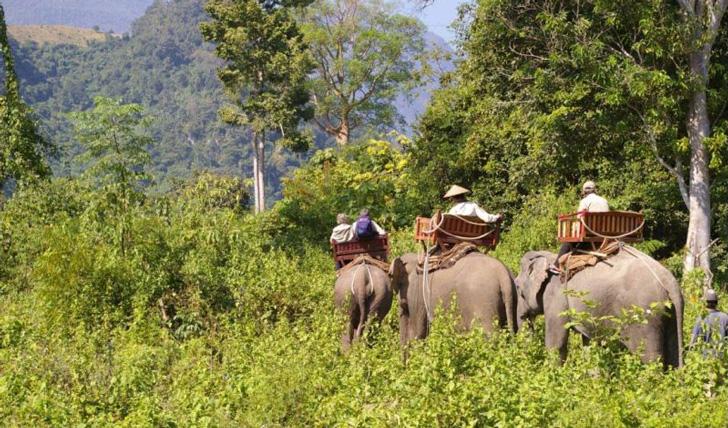 elephant-trek