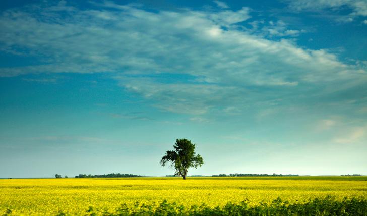 The Beautiful Plains of Manitoba