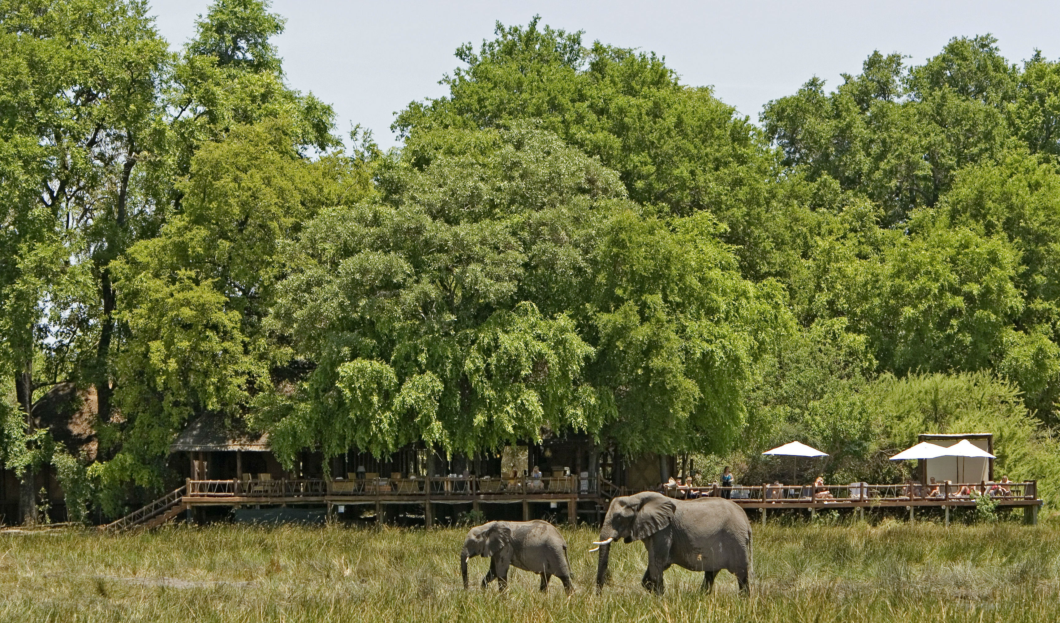 Watch gentle giants roam free on the Moremi Game Reserve