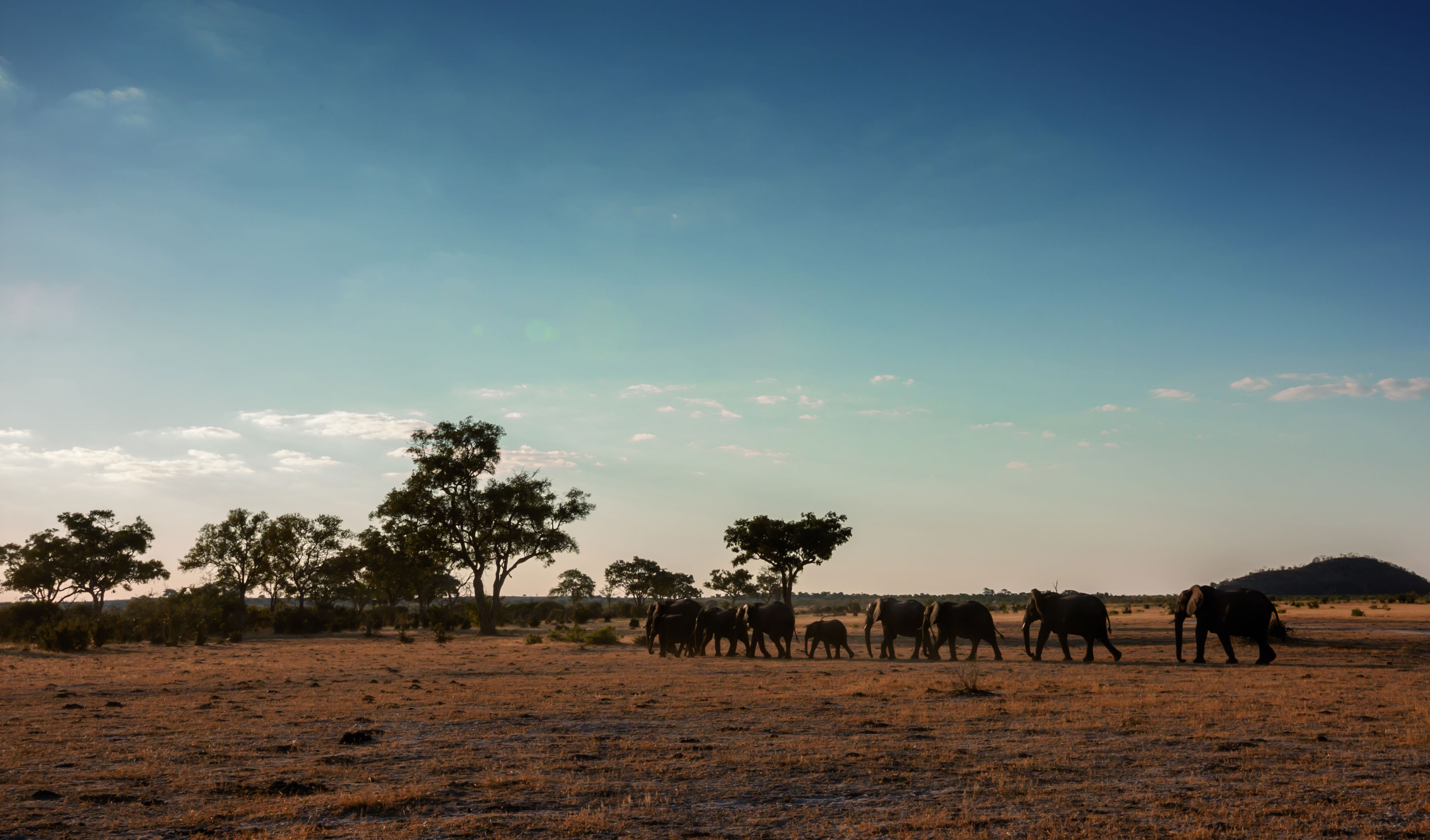 Elephant herds roam just moments from your tent