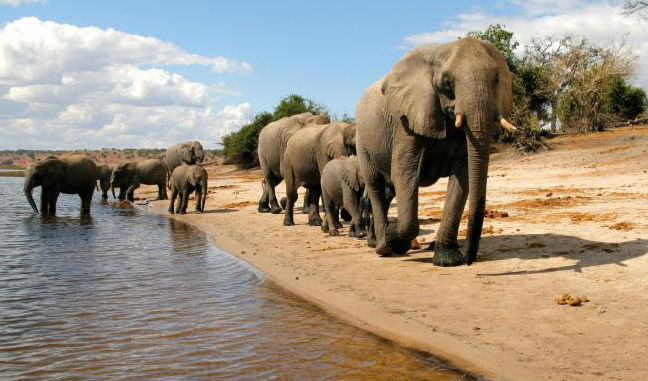 Elephants on luxury safari in Botswana