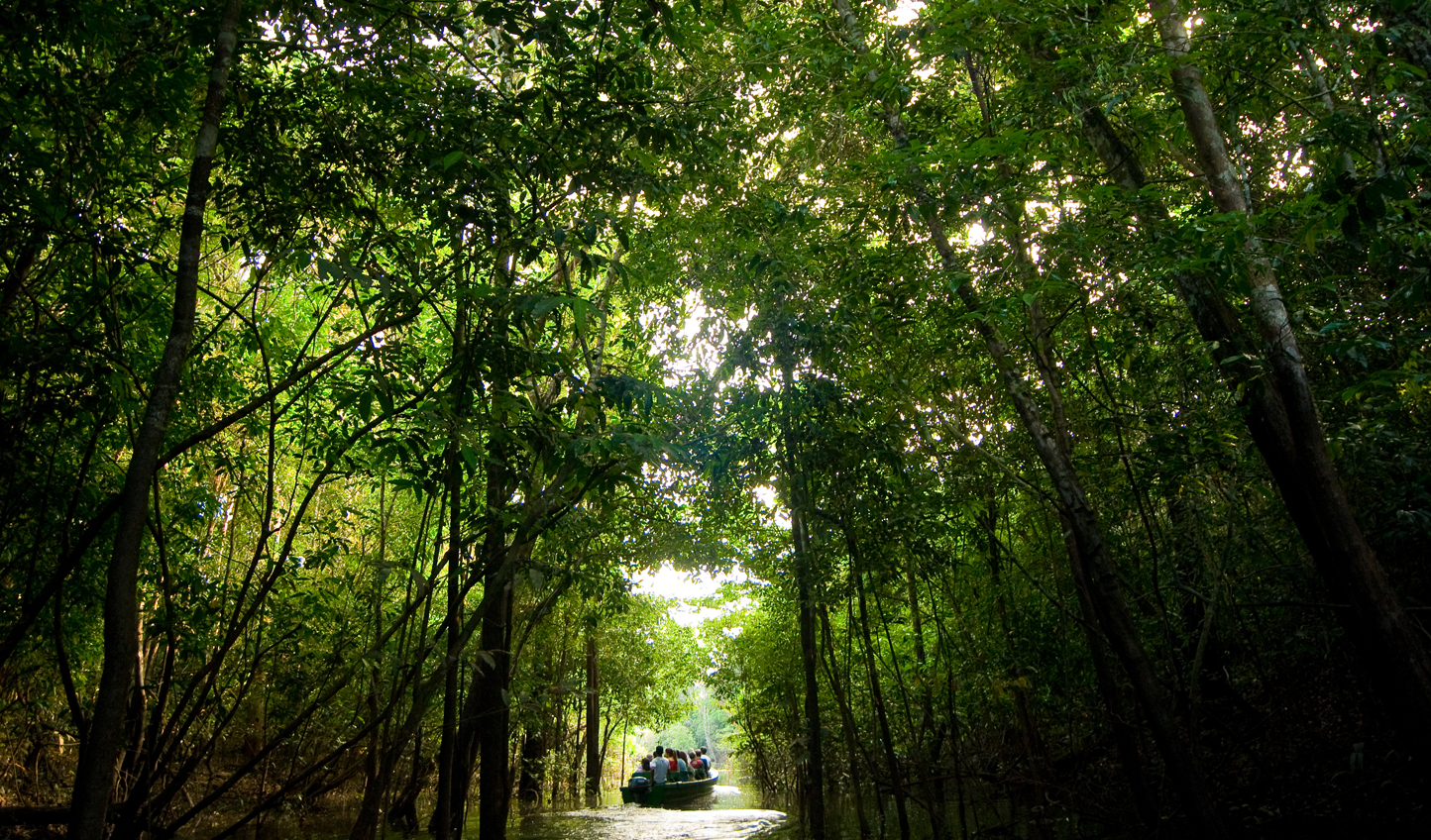 Take in the sights of the jungle from the Rio Negro