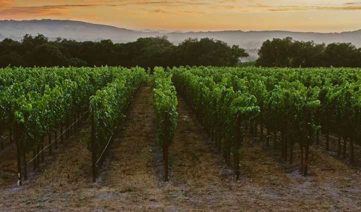 Explore Sonoma wine country