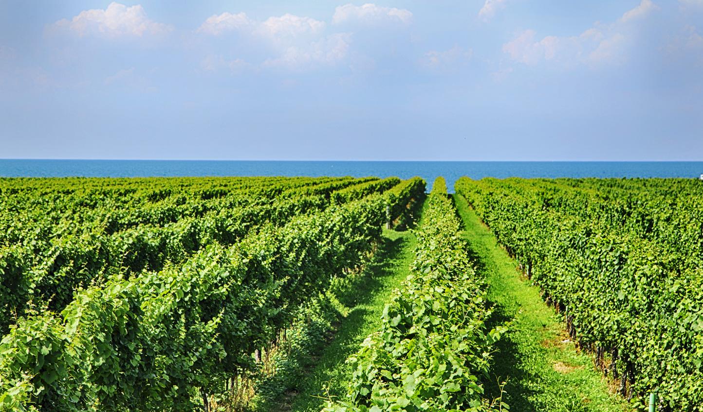 A charming vineyard in Niagara