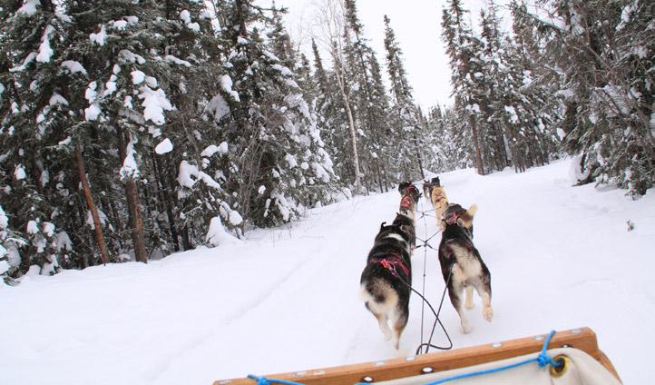 Dog sledding in the NWT, Canada