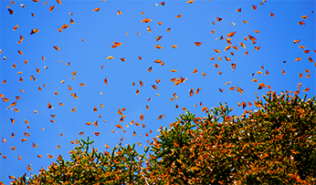 Butterflies migrating in Mexico | Inspired by Experience