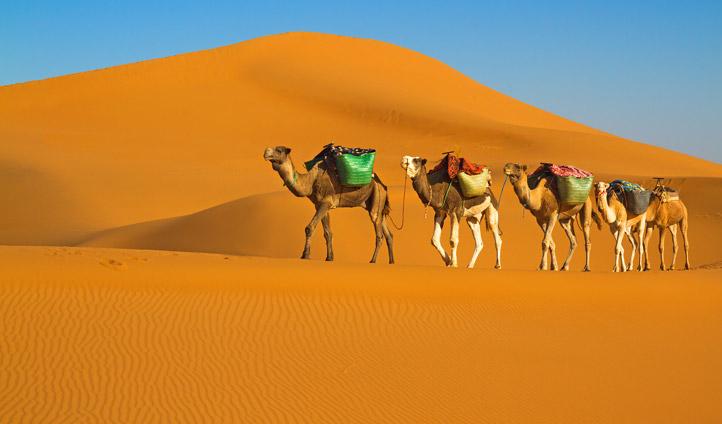 bigstock-Camel-caravan-moving-in-Sahara-67876873