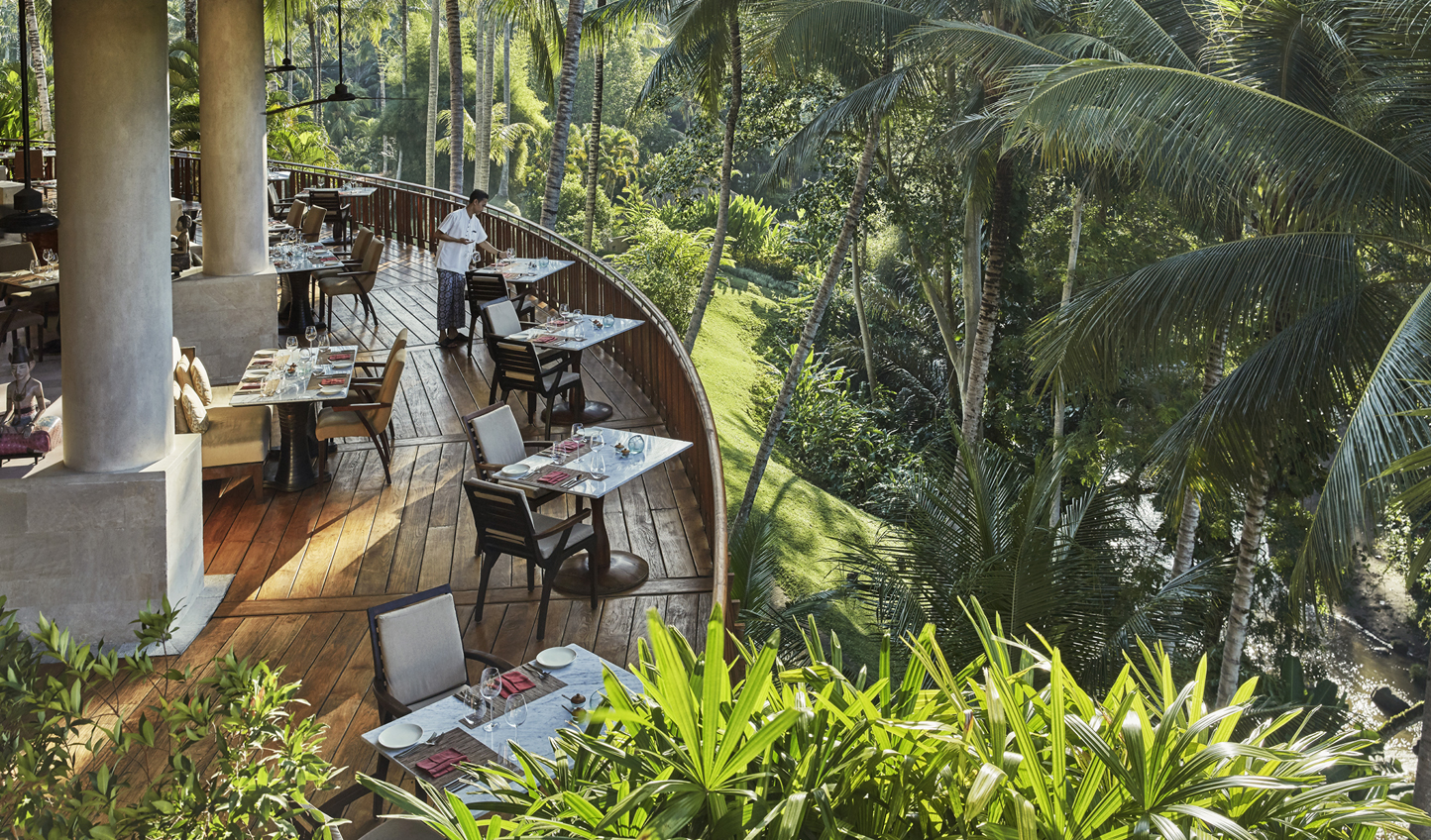 Dine amongst the canopy