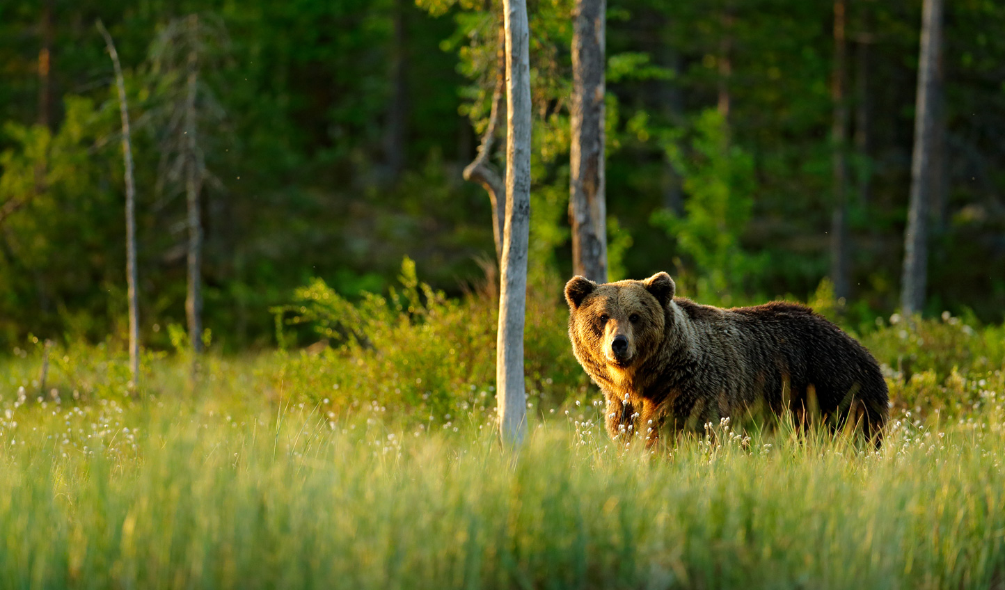 Get closer to nature with a summer in Finland and Sweden