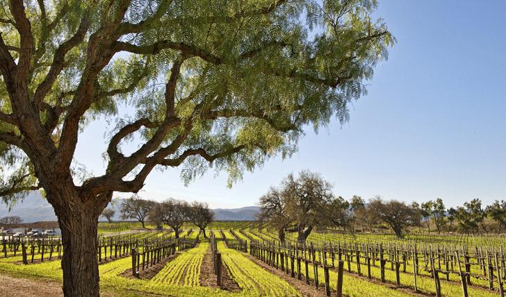 Santa Ynez Valley, wine country in Santa Barbara