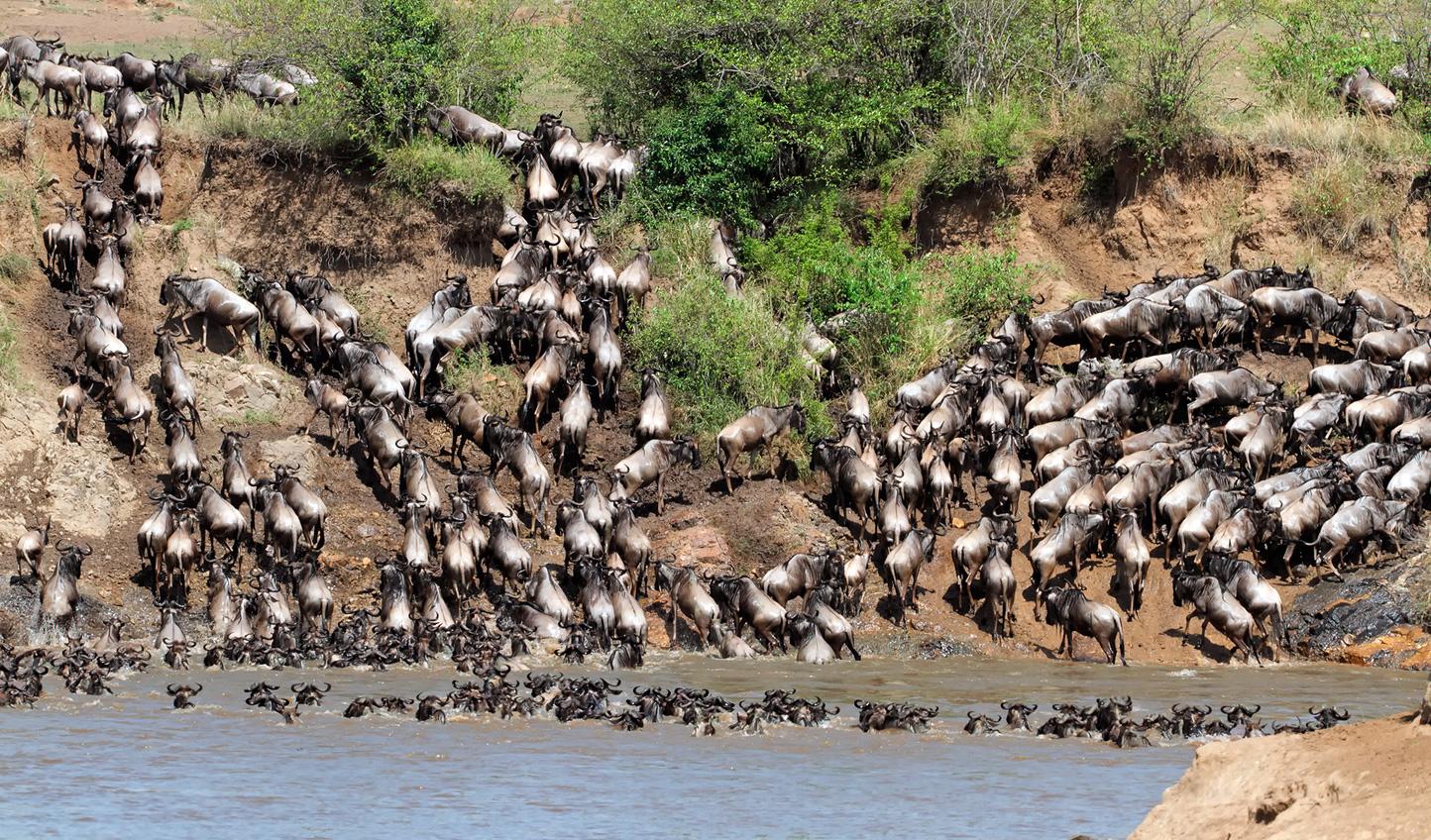 Awe at the Serengeti migration