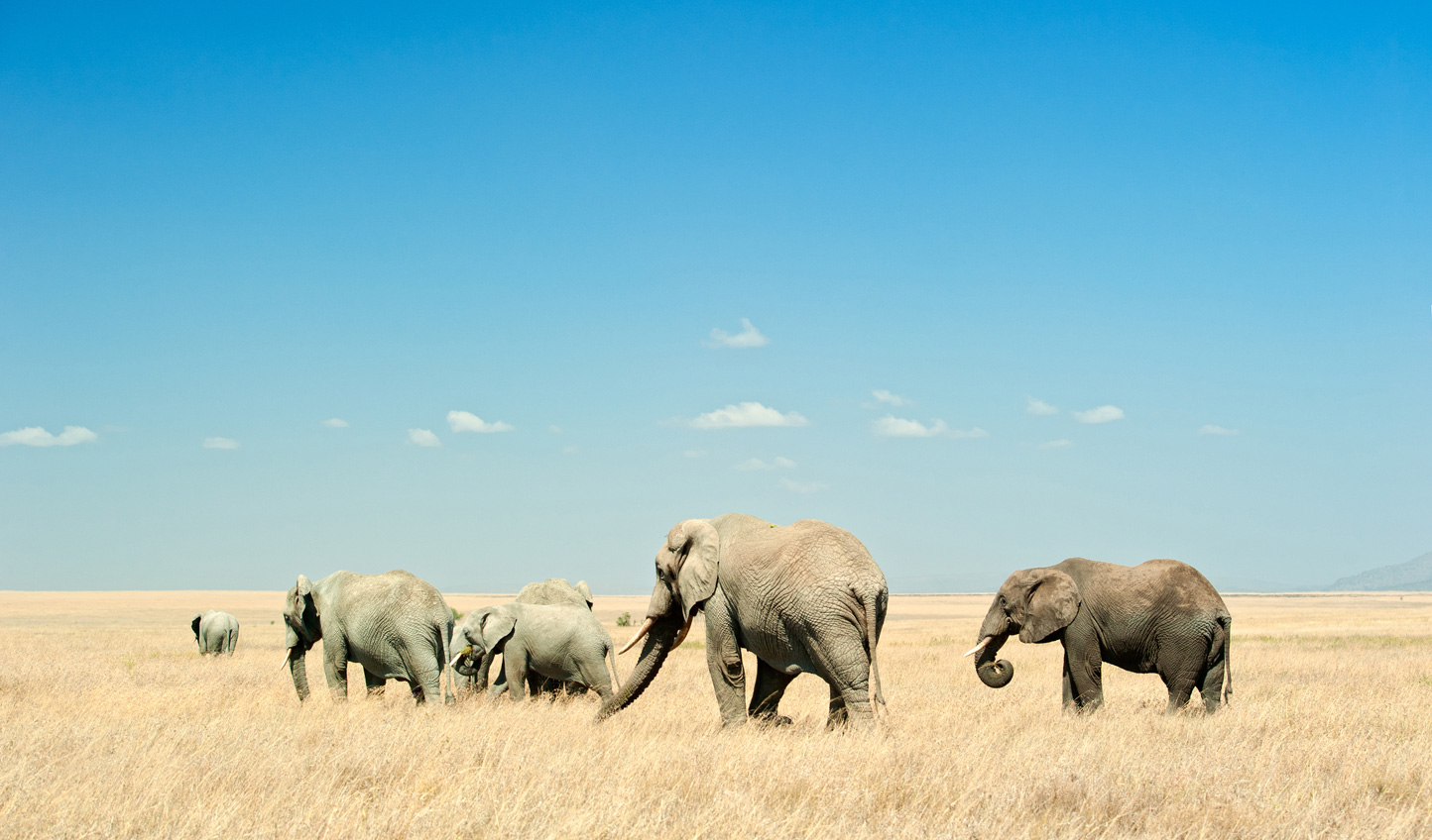 Journey across the plains of Tanzania with wildlife by your side