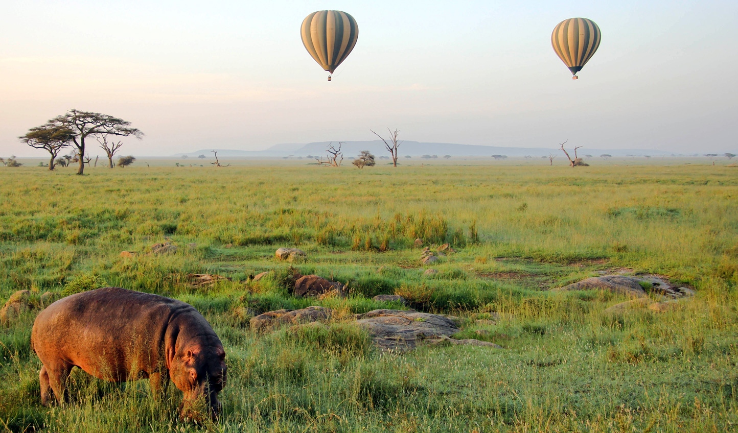 See the wildlife of the Serengeti from above