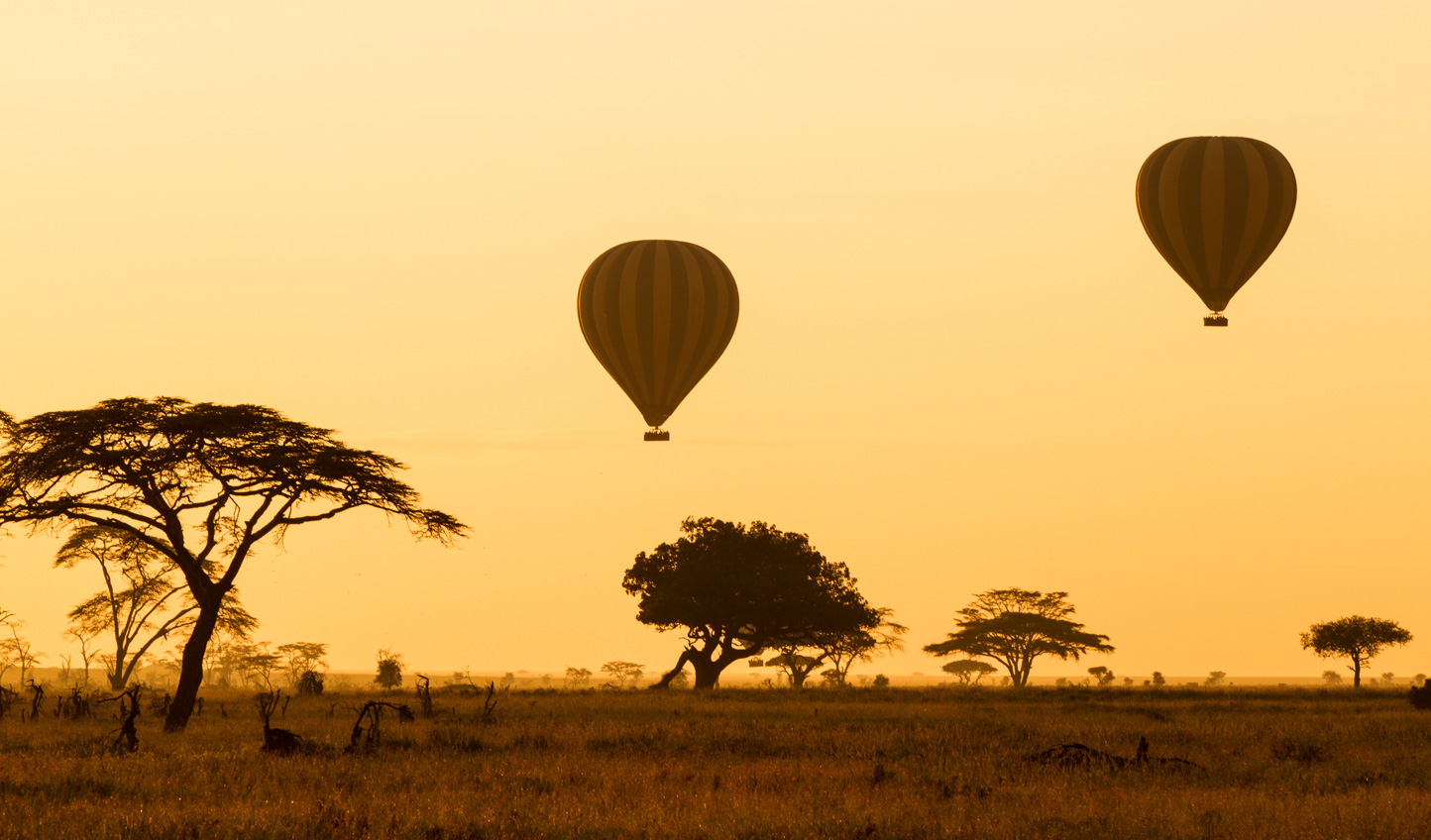 Soar above the Serengeti
