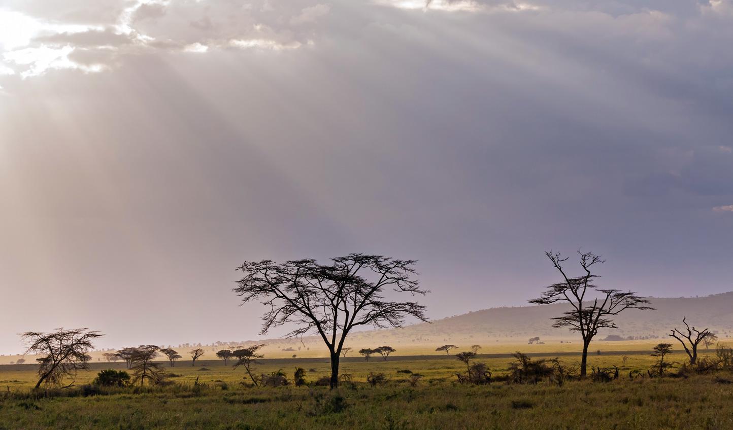 Explore the vast, rumbling plains of the Serengeti