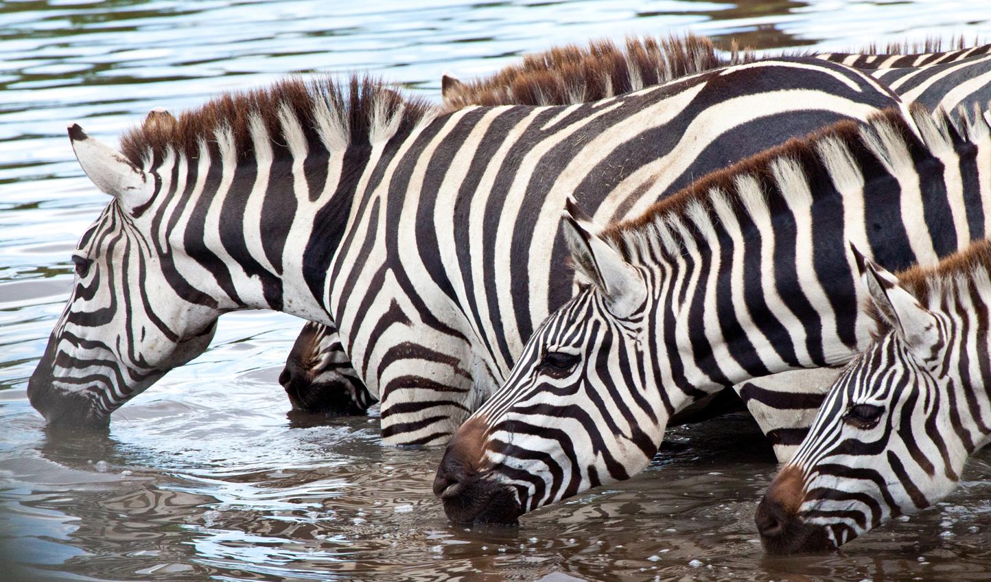 Watering holes act as virtually guaranteed wildlife-spotting spots