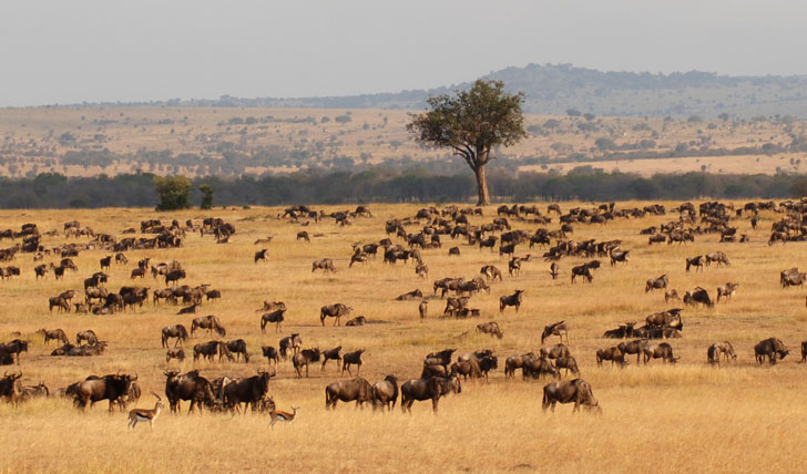 The iconic Serengeti Migration
