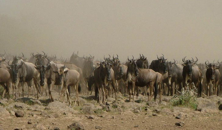 Wildebeest Migration luxury safari